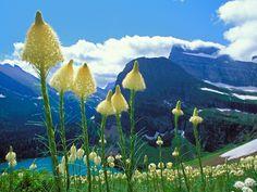 Glacier National Park Montana | Glacier National Park, Montana, USA | Beautiful Places to Visit