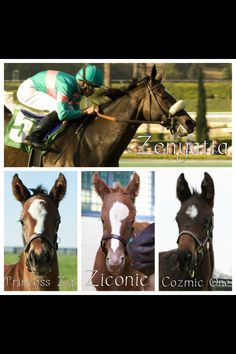 Zenyatta's foals - They all have her ears...time will tell if they have her talent and her dance moves!