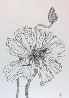 """Poppy Study 31 - Original Drawing "" by Kylie Fogarty. Paintings for Sale. Bluethumb - Online Art Gallery"