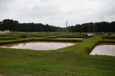 https://flic.kr/p/fExRyh | Soy Aquaculture Pond