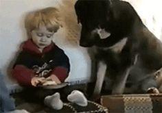 http://www.petsgifs.com/wp-content/uploads/2013/03/dog-sandwitch.gif