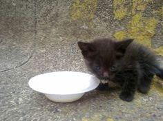Este gatito (aparentemente es gatita) apareció hoy en el parqueadero de El País, en Cali. Si alguien lo quiere, puede preguntar por él en la sede principal: Cra 2 # 24-46  Tiene aproximadamente un mes.