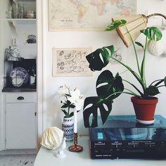 Trendikkäimmät huonekasvit: 2. Jättipeikonlehti