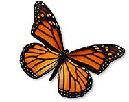 Monarch Butterfly Protection, Reforestation, Forests for Monarchs