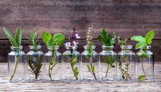 Here's how to grow herbs indoors. Growing Herbs Indoors in water.