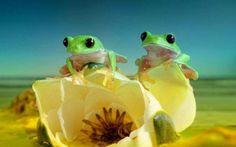 Лягушка бывает привлекательной - уверен фотограф Уилл Мейер