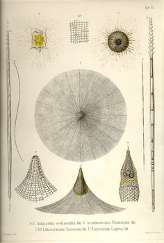 These are the 35 copper plates that accompanied Ernst Haeckel's Radiolaria book from 1862.This volume has kindly been provided by Prof. Dr. Peter von Sengbusch (Institut für allgemeine Botanik, Hamburg, Germany).  The 35 plates were scanned by Kurt Stüber.   Tafel_04.jpg (850×1261)