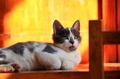 Cat, Feline, Kissat, Keittiömestarimme