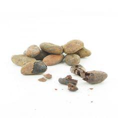 Les fèves de cacao sont les graines du cacaoyer, qui sont utilisées pour la fabrication du chocolat. Elles sont extraites des baies que l'on ouvre à la récolte et que l'on met à sécher. La cabosse contient 16 à 60 graines.