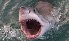 Αυτός είναι ο πιο λυσσασμένος καρχαρίας όλων των εποχών! (vid) – My Review