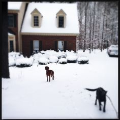 2.26.15 * A Peek Into The Life | At least the dogs were enjoying the snow day. Once we had electricity back on, the mail had arrived, the heat was back on and I'd shoveled the drive, then I was happy too. | Photo | Dogs of Pinterest | Artsy | Photography |