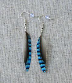 Jay bird blue feather earrings Blue Eurasian jay feather