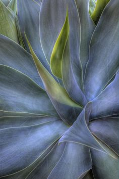 ~~Agave Splendor | agave macro by Eggers Photography~~