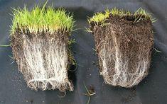 Using Mycorrhizal Fungi In Organic Farming