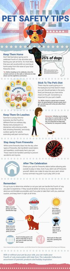 Fourth of July can be stressful for animals. Here are tips for the fourth and your furry friend!