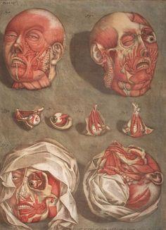 ☤ MD ☞☆☆☆ Jacques Fabien Gautier d'Agoty, from Cours complet d'anatomie peint et gravé en couleurs naturelles, 1771. Enlarge: https://pinterest.com/pin/287386019947294209