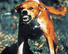 rabid dog in to kill a mockingbird - Yahoo Image Search Results