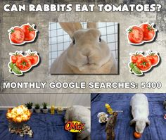 Bunbun checking out tomatoes as a rabbit food in this new episode of Can rabbits eat this or not? Rabbit Eating, Rabbit Food, Can Rabbits Eat Tomatoes, Rabbit Gif, Friendship Quotes, Bunny, Treats, Canning, Animal