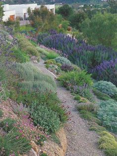 hillside landscape ferns and succulents and cactus - Google Search