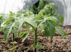 Garden, Plants, Sodas, Garten, Lawn And Garden, Gardens, Plant, Gardening, Outdoor