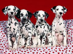 4 Valentine's Day Puppy Love Dalmation Dog Dogs Puppies Heart Love Candy Greeting Notecards/ Envelopes Set. $6.99, via Etsy.