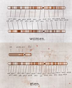 """The difference between male and female chromosomes.  Notice anything special? (If you guess that male chromosomes are """"unfinished,"""" you are correct!)"""