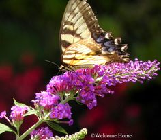 Welcome Home: MY MOTHER'S GARDEN