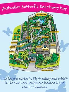 Butterfly Sanctuary - Cairns