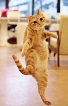 ♫ ♫ dancing cat ♫ ♫ ♫ i learned this new dance from the fashion Ms cat next door. Kittens Cutest, Cats And Kittens, Cute Cats, Cat Fun, Funny Kitties, Silly Cats, Baby Animals, Funny Animals, Cute Animals