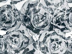 Textile Print / Floral Pattern Repeat