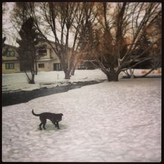 Lunch breaks with Sadie Sadie, Life Is Good, Lunch, Snow, Outdoor, Outdoors, Eat Lunch, Life Is Beautiful, Outdoor Games