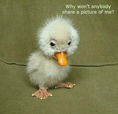 """I will 'share' you... after all you just may be another """"ugly duckling"""" swan.....HUH???"""