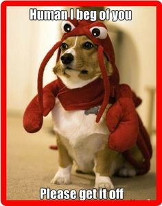 $5.5 - Funny Corgi Dog Costume Refrigerator / Tool Box Magnet #ebay #Collectibles
