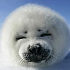 Silly seal