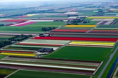 Blossoming tulip fields in the town of Anna Paulowna, Netherlands | Aerial photography by French photographer Normann Szkop