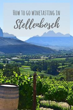 Looking at what to do in South Africa? Be sure to go winetasting in Stellenbosch!