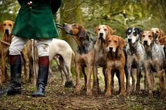 Handsome Hounds....