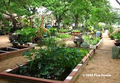 Genial Hill Country Water Gardens In Cedar Park (a Suburb North Of Austin)