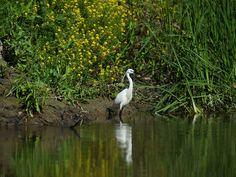 Partizani, Delta Dunării: La Casuta dintre Ape Danube Delta, Bird, Animals, Animaux, Birds, Animal, Animales, Animais