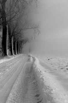 winter road and trees