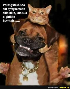 Paras ystava saa... - HAUSK.in Animals And Pets, Funny Animals, Happy Moments, Kittens Cutest, Funny Photos, Funny Texts, Haha, Best Friends, Life Quotes