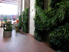 Living wall - in the Tory atrium at the University of Alberta (Edmonton, Alberta, Canada)