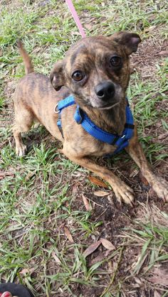 If you would like to see any of our dogs, please contact Andrea at (727) 644-1341 or come by Animal House on Wednesday's between 3pm and 5pm or every Saturday from 11am until 2pm.Animal House is located at 950 34th St N., St. Petersburg, Florida1...