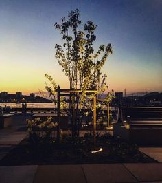 Skap et flott uterom med belyste trær og planter   Kjøp nye utelys til 10-30% rabatt i hele helgen