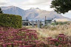 Suzanne Turley Landscapes - Queenstown