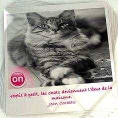 « Petit à petit, les chats deviennent l'âme de la maison ». Jean Cocteau.   Si vous aimez les animaux, venez nous rejoindre sur https://www.facebook.com/ZoomOnEntrechiensetchats