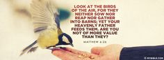 Matthew 6:26 NKJV - Look at the Birds of the Air - Facebook Cover Photo