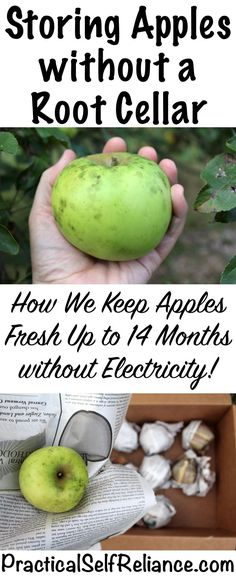 Keep Apples Fresh for Over a Year (without a root cellar) — Practical Self Reliance