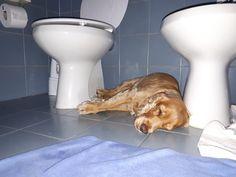 COME CAPIRE SE IL CANE E' ACCALDATO? - Sheila the Dog Dogs, Pet Dogs, Doggies