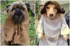 These Are The Top 10 Dog Costumes Trending For Halloween 2016 – AngusPost